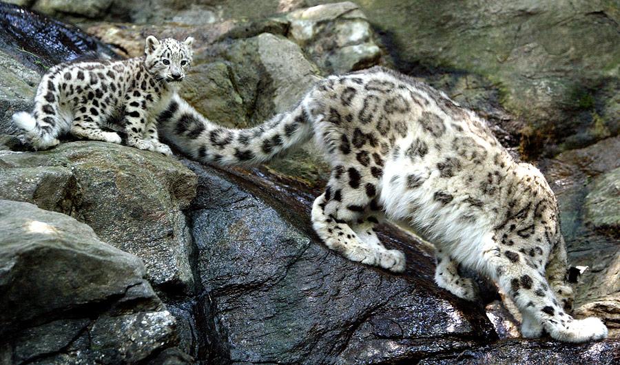 Бронксовский зоопарк, Нью-Йорк, США, Северная Америка и Карибы